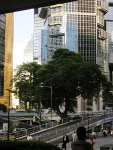 Tree Hong Kong